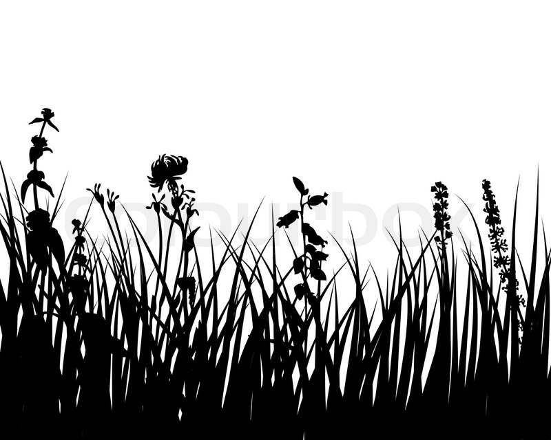 tall grass silhouette. Fine Tall Vector Grass Silhouettes Background For Design Use  Stock  Colourbox In Tall Grass Silhouette D