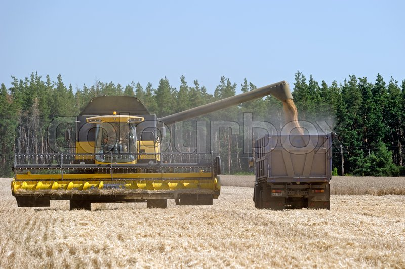Editorial image of 'Kharkiv Region, Ukraine - July 25, 2017: Combine harvester load wheat in the truck at the time of harvest in a sunny summer day in Kharkiv Region, Ukraine on July 25, 2017.'