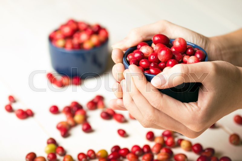 Stock image of 'woman's hands holding a bowl of cranberries '