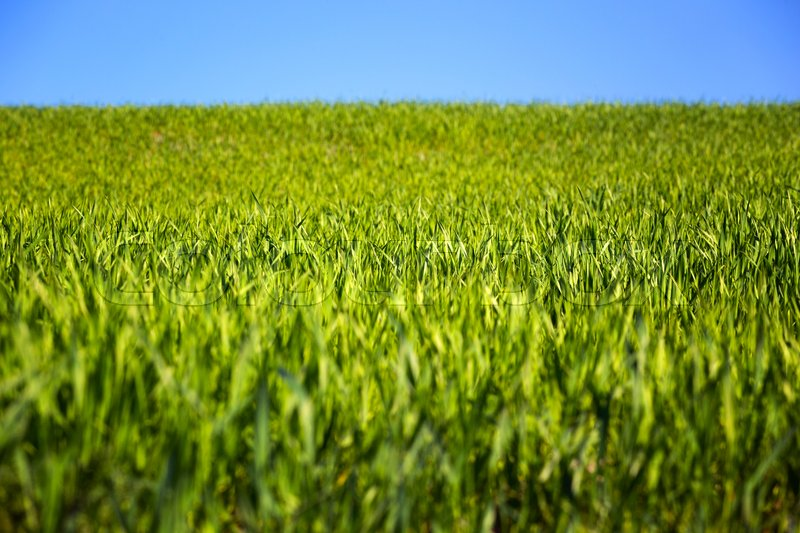 Stock image of 'background - green grass and blue sky '
