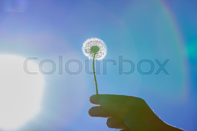 Stock image of 'Dandelion and the sun'