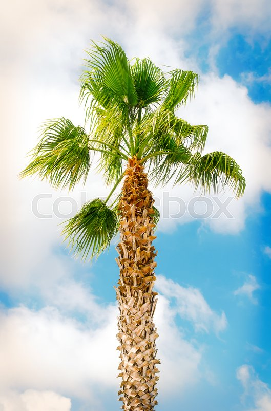 Stock image of 'palm tree on blue sky background'