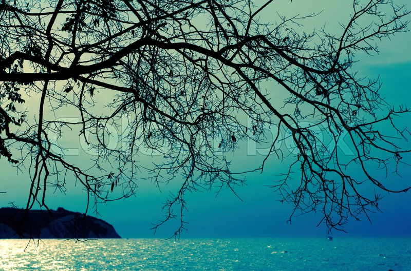 Stock image of 'silhouette of branches over the sea'