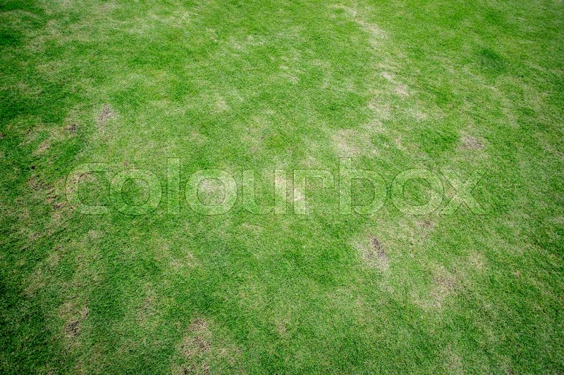 Stock image of 'Green grass texture'