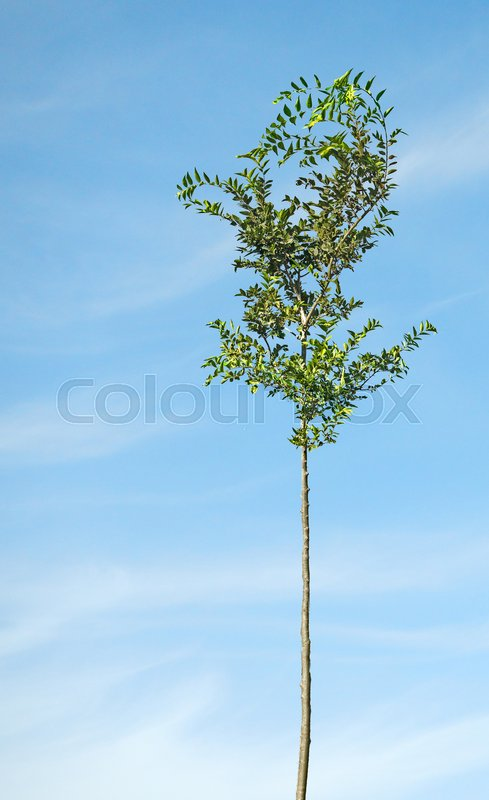 Stock image of 'Tree on meadow'
