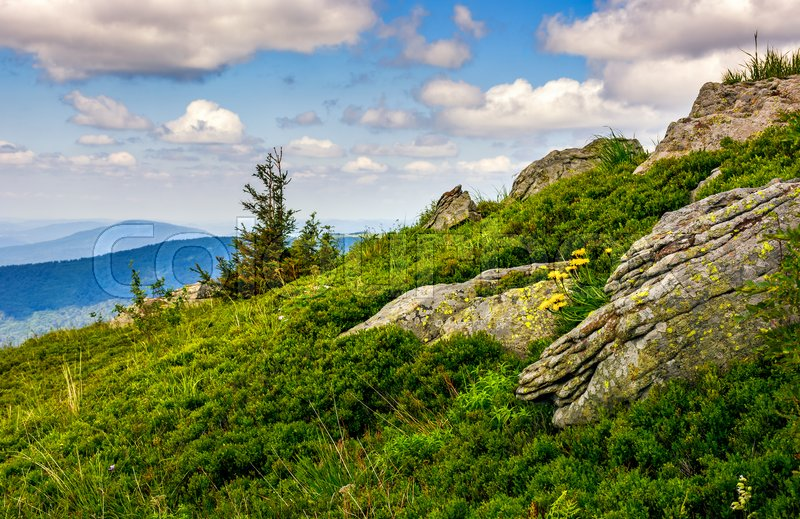Stock image of 'lonely spruce tree among big rocks on grassy slope. nice vewpoint with hill and peak in the distance. lovely mountain landscape with blue sky and clouds in summer time'