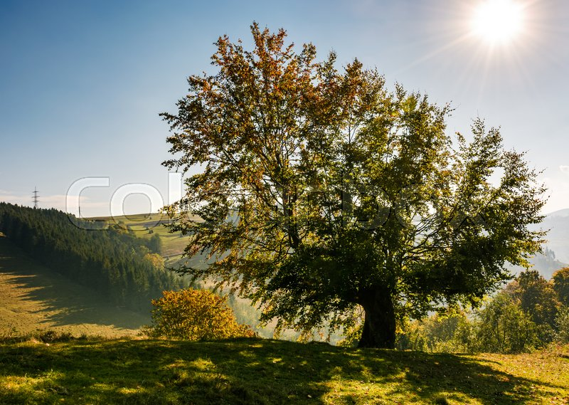 Stock image of 'tree on a mountain grassy hill side meadow on a clear autumn sunny day with blue sky. powerlines along the hillside'