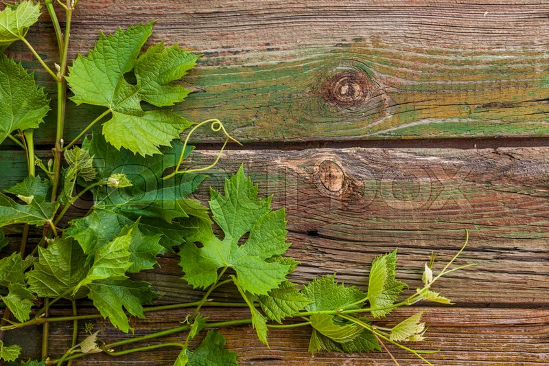 Stock image of 'Grape leaves on a old wood background.'