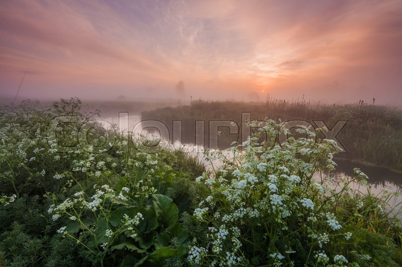 Stock image of 'Misty dawn on the river bank with flowers.'