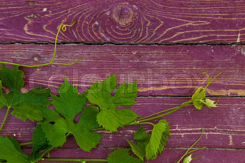 Stock image of 'Grape leaves on a old red wood background.'