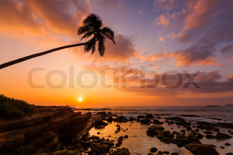 Stock image of 'Lonely palm tree on the beach at sunset sky background'