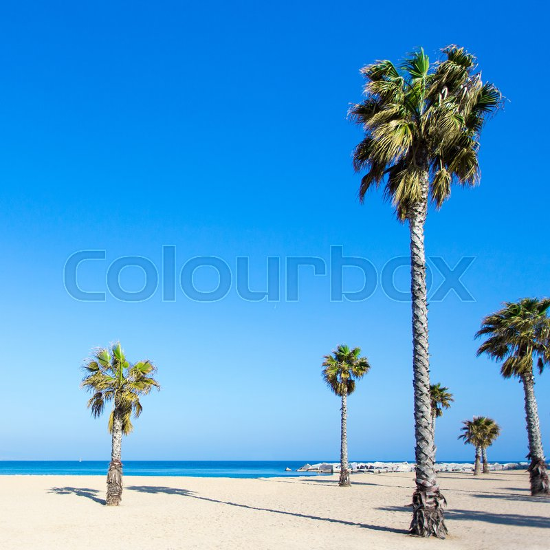 Stock image of 'vacation and travel concept - palm trees on summer sandy beach'