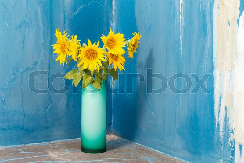 Stock image of 'Sunflowers in a glass vase. Against blue colored wall as a background.'