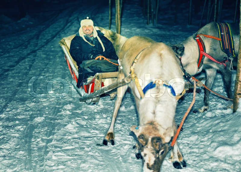 Man and Reindeer with sledge at night safari in the forest of Rovaniemi, Lapland, Northern Finland. Toned, stock photo