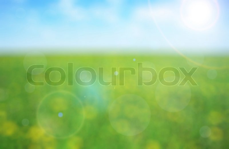 Green meadow with yellow flowers on a sunny day - defocused background, stock photo