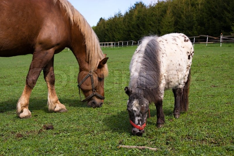 pferde und pony bilder
