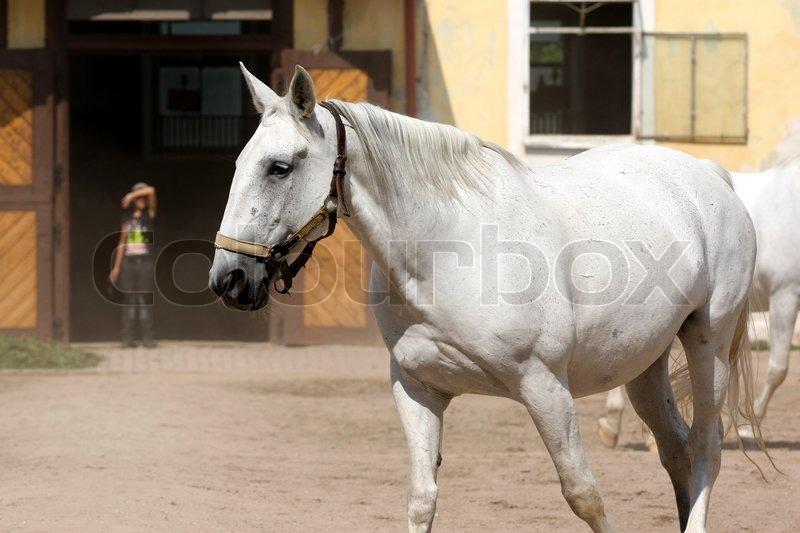verdens ældste hest