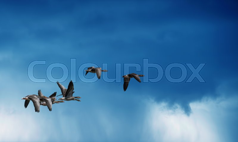 Rainy sky with flying birds natural background environment or ecology concept, stock photo