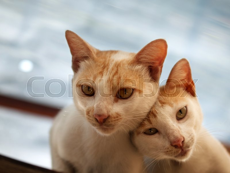 COLOR PHOTO OF COUPLE CAT LOOKING AT CAMERA, stock photo