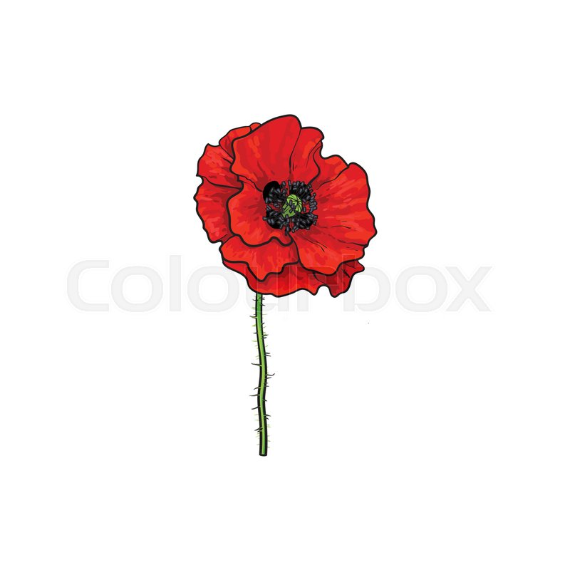 Vector red poppy flower blooming isolated illustration on a white stock vector of vector red poppy flower blooming isolated illustration on a white background mightylinksfo