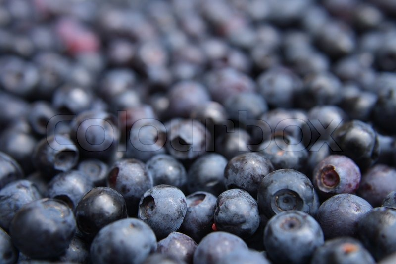 Fresh Blueberries Background As Nice ...