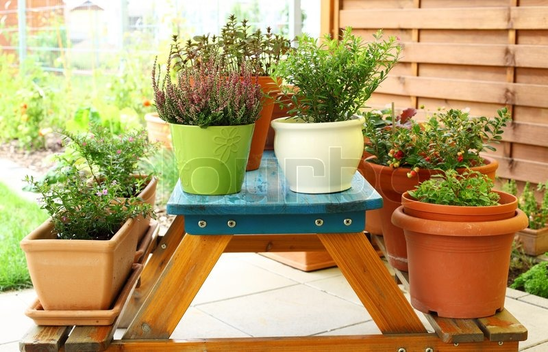 question on planting flowers in claw foot tub - Garden Junk Forum
