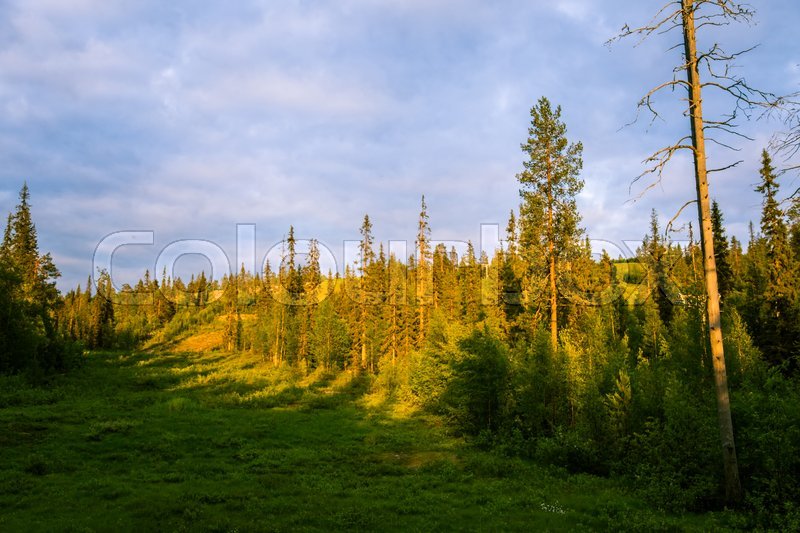 Copyright Free Photos Of Finnish Nature To Use