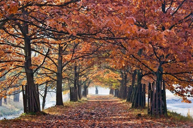 Buy Stock Photos Of Trees Colourbox