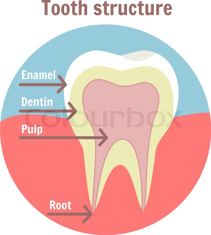 Cartoon Mouth And Teeth Diagram Wiring Diagram Electricity