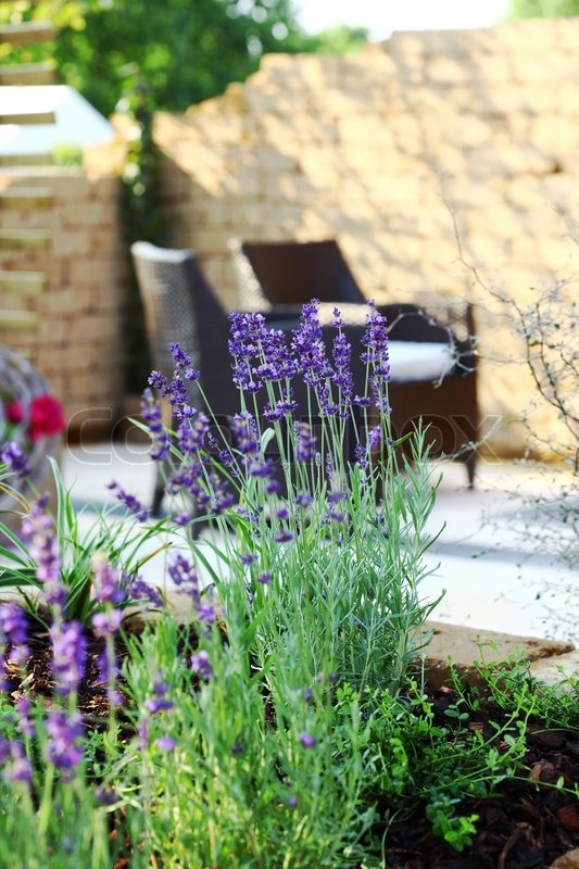 Beautiful Lavender With Outdoor Furniture And Sun Deck In Background |  Stock Photo | Colourbox