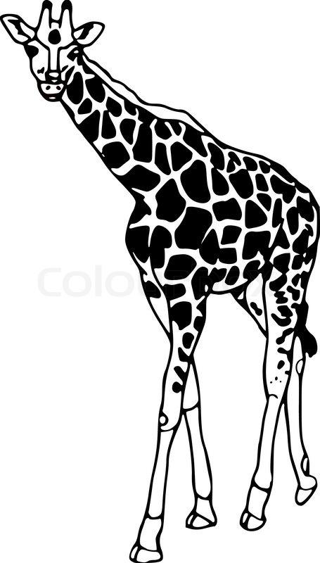 Line Art Giraffe : Vector contour giraffe isolated on white background