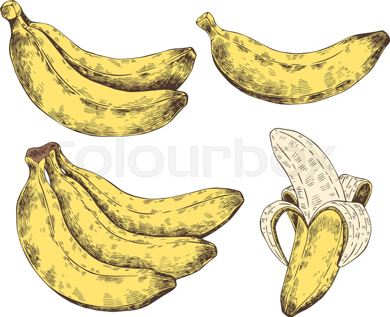 yellow with white hand drawn banana vector sketch tropical exotic fruit template for printing packaging advertising web design card vector