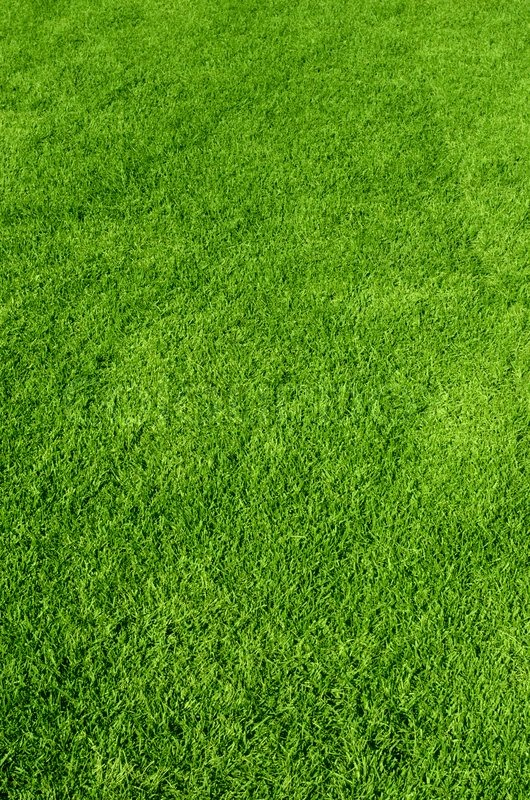 Photo of the beautiful green grass texture stock photo for Pretty grass
