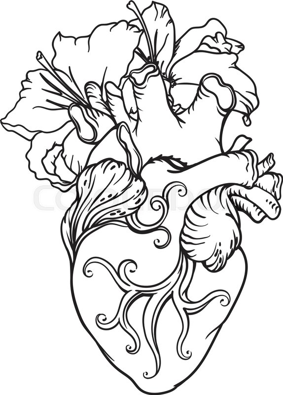 stylized anatomical human heart drawing heart with white lilies in rh colourbox com human heart outline tumblr human heart outline tattoo