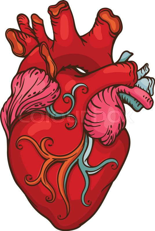 drawing of stylized human heart outline design object red heart outline vector heart outline illustrator vector