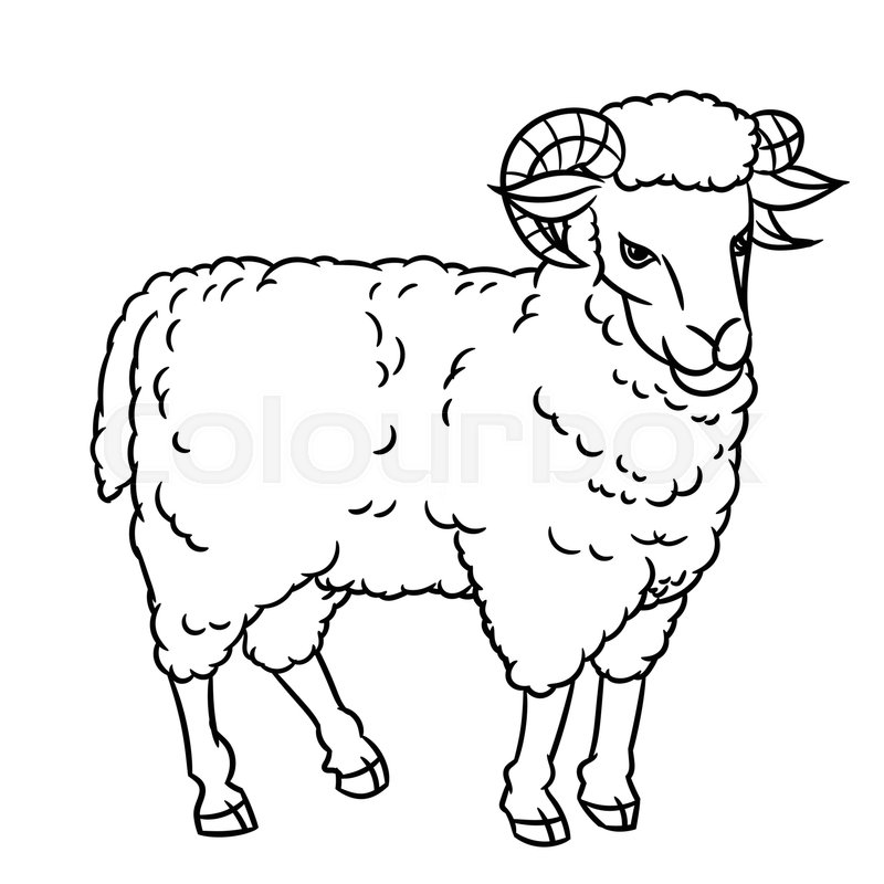 hand drawing sheep farm animals set sketch graphic style design for education text book coloring book vector