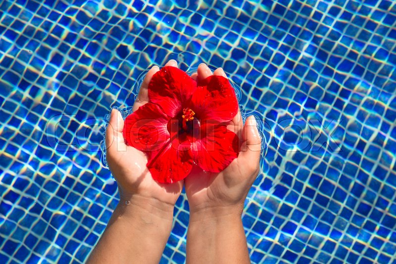 Tropical Hibiscus Flower Floating In Stock Image Colourbox