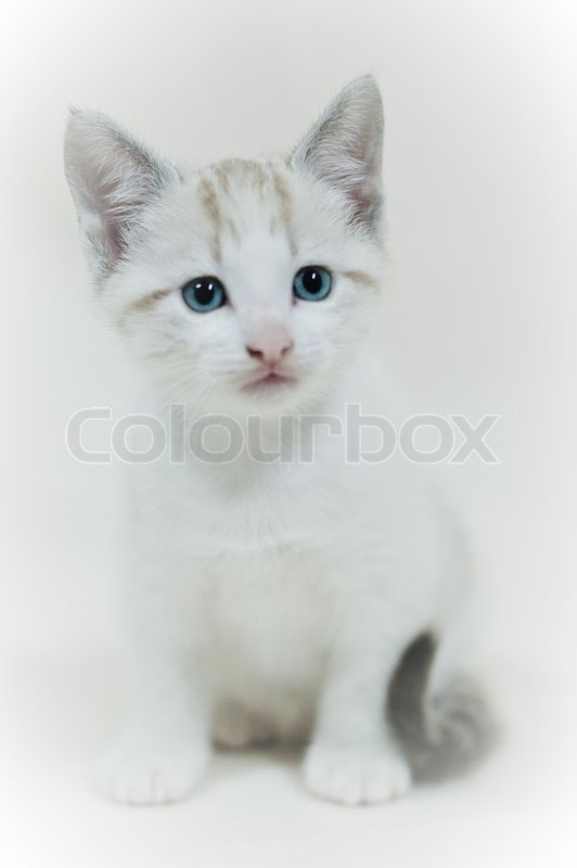 Cute Baby White Cat On A White Stock Photo Colourbox