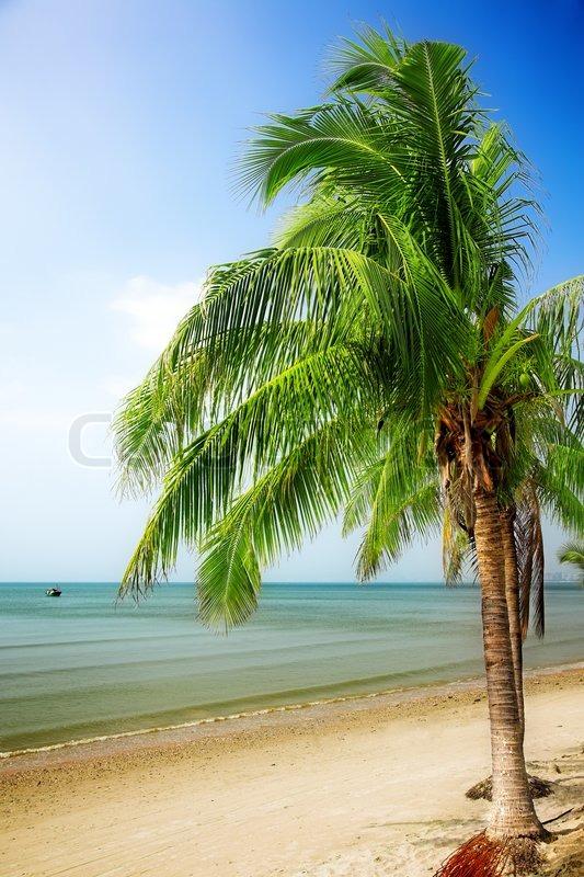 Seascape Beach Resort >> Tropical paradise - coconut palm tree on the sunny bay | Stock Photo | Colourbox