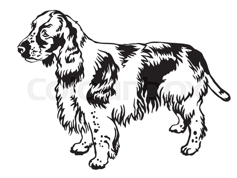 Decorative portrait of standing in profile english for English springer spaniel coloring pages