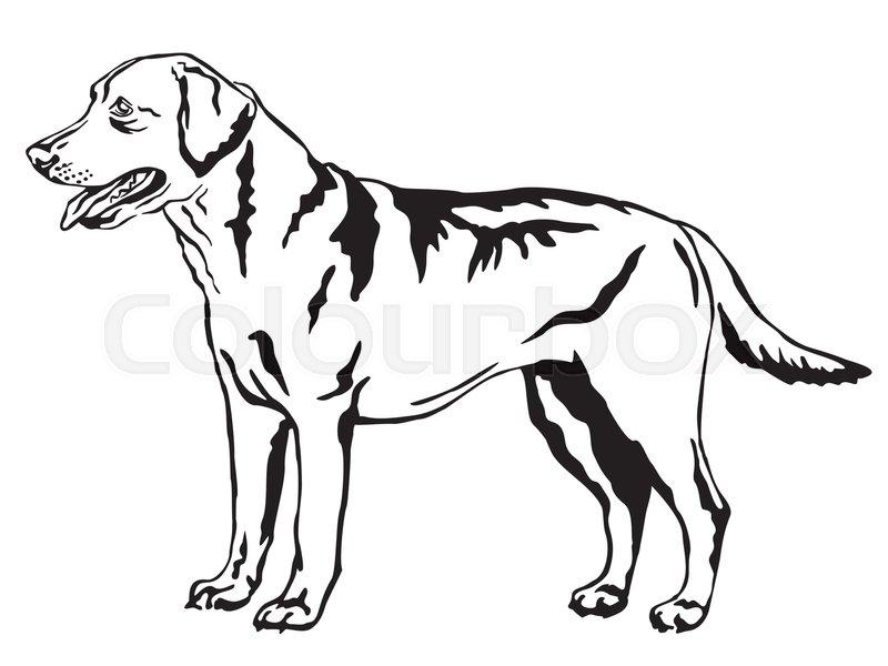 Decorative portrait of standing in profile Labrador Retriever ...