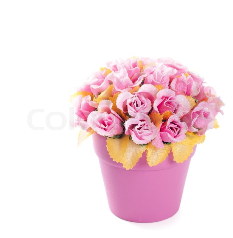 Pink flowerpot with pink artificial roses image isolated over pure pink flowerpot with pink artificial roses image isolated over pure white background stock photo colourbox mightylinksfo