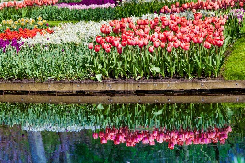 Garden landscape. modern garden design. Landscaped Yard and Garden, stock photo