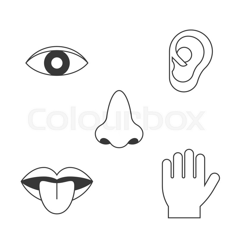 five senses icon  outline design with name  sight  hear  smell  taste  touch