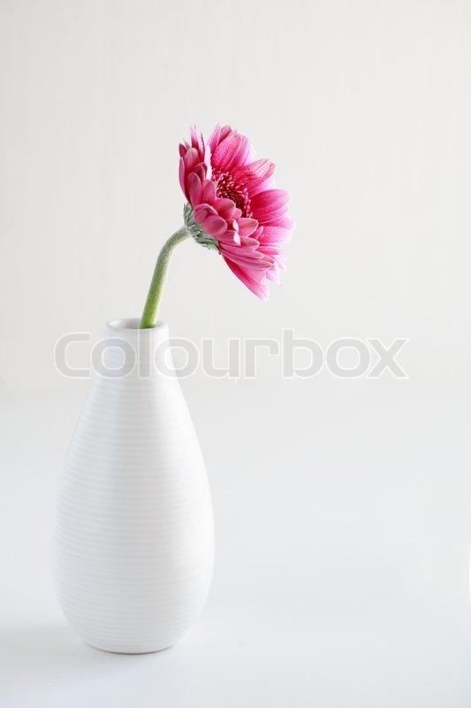 Pink Flower In Vase On White Background Stock Photo Colourbox
