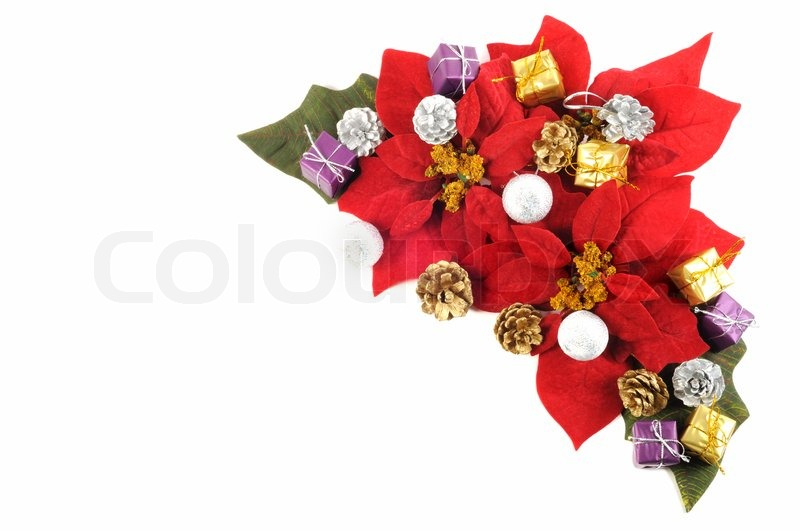 christmas flower poinsettia with xmas decor on a white background stock photo colourbox