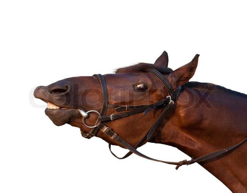 Funny Tan Horse Close Up Try To Eat A Stock Photo