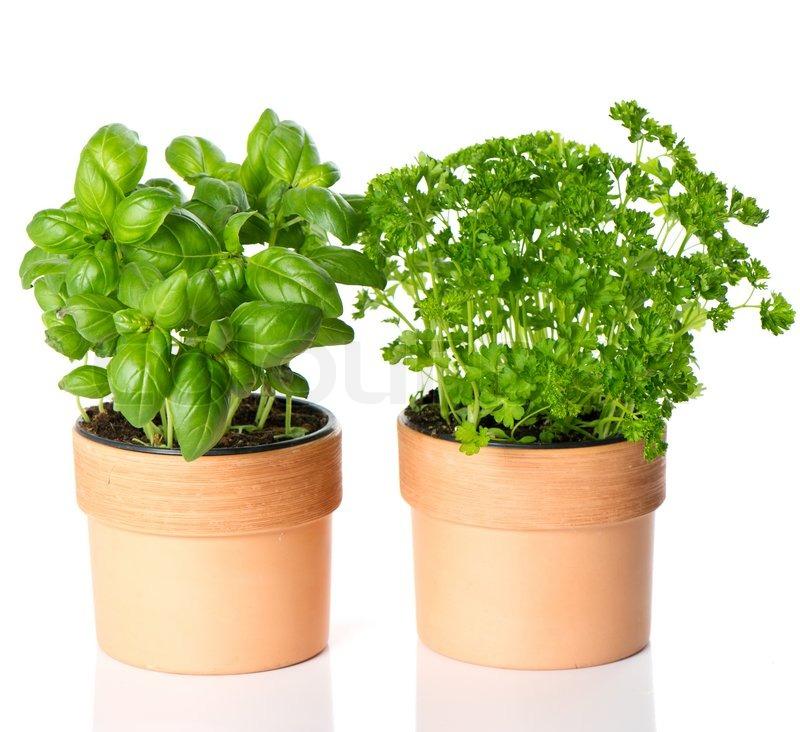 Vegetable Garden Inspiration Herbs