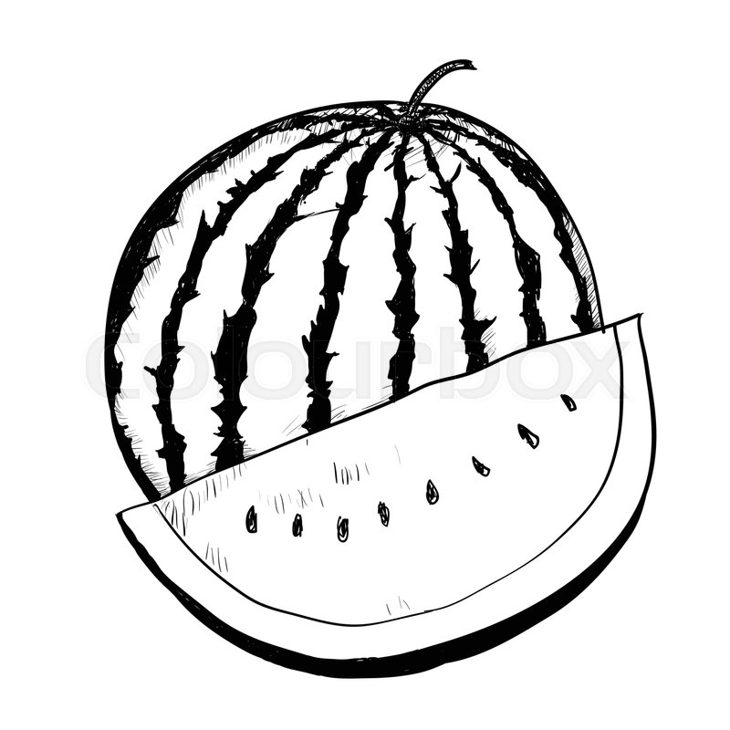 Hand Drawing Of Watermelon On White Stock Vector Colourbox