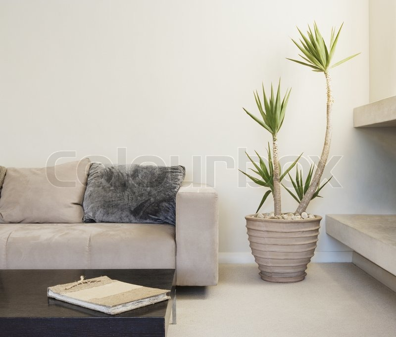 Modern Living Room With Potted Plant Can Be Used As Background